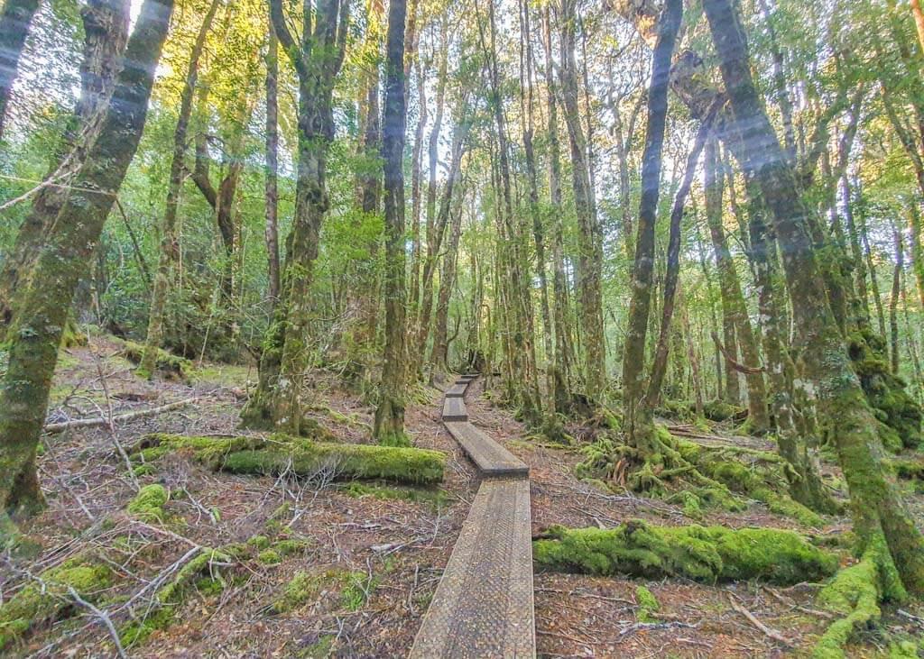 Best short walks Cradle Mountain